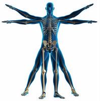 Preventative Medicine in Las Vegas, Henderson Chiropractor, Las Vegas Chiropractor, Gerber Chiropractic 702-878-0056 or 702-658-1420, Summerlin Chiropractor